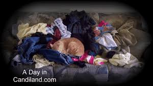 4_Cat_in_Laundry
